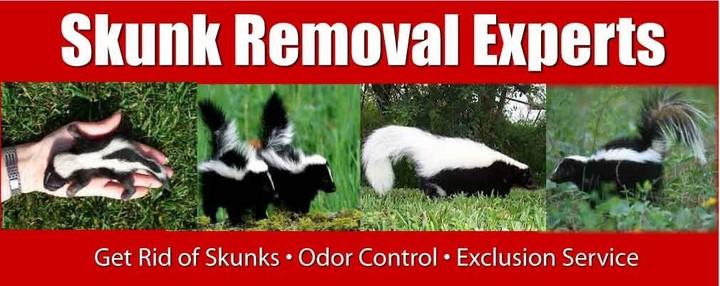 skunk-removal.jpg
