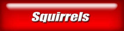 wennav-squirrels2.png