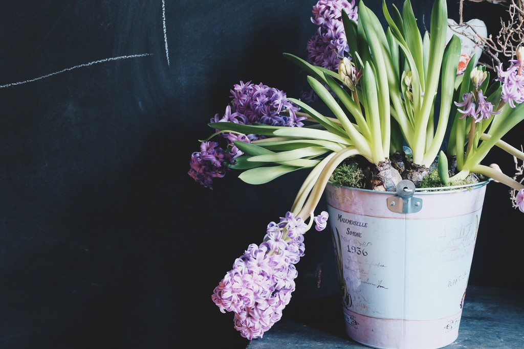 picography-plant-potted-flowers-violet-pot.jpg