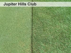 22-the-greens-encroachment-barrier-jupiter-hills-club.jpg