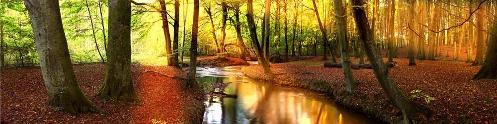 ForestSunlightA.jpg